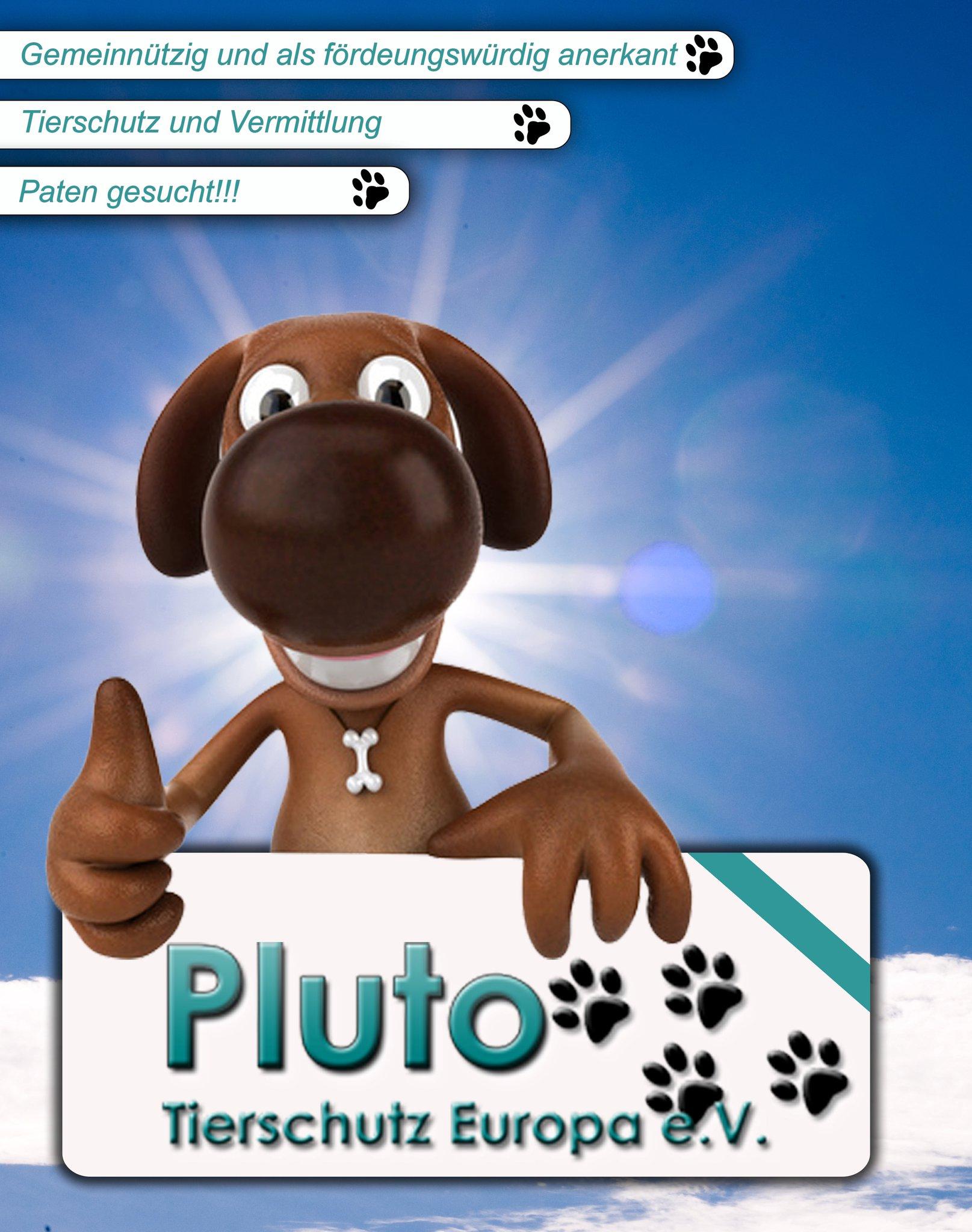 Neue Homepage für Pluto Tierschutz Europa e.V.